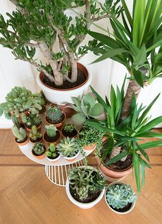 Love this large collection of plants all together in one spot
