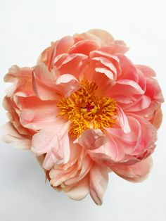 Free Images : nature, blossom, petal, summer, spring, pink, botanical, peach, floristry, peony, flowering plant, rose family, cut flowers, floral design, artificial flower, rosa centifolia, rose order, flower arranging 2448x3264 - - 1373264 - Free stock photos - PxHere