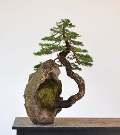 """""""There are no borders in bonsai. The dove of peace flies to palace as to humble house, to young as to old, to rich and poor. So does the spirit of bonsai"""" - JOHN YOSHIO NAKA - Ikebana, Bonsai Tree Types, Indoor Bonsai Tree, Bonsai Trees, Mini Bonsai, Bonsai Artificial, Pot Jardin, Miniature Trees, Miniature Zen Garden"""