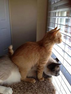 ラブリー-KittyCats、thecatladynextdoor:これは、彼らが何をすべきか