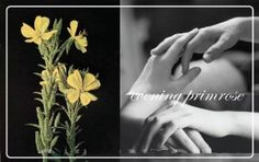 Evening Primrose Oil for weight loss is the recently discovered advantage. Other than this there are several uses of evening primrose oil . Evening Primrose Oil Benefits, Healthy Nails, Herbal Remedies, Herbalism, The Cure, Discovery, Blog, Herbal Medicine, Blogging