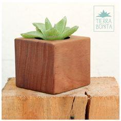 Mini-bonita  Mini maceta para cactus y suculentas Hecha a mano con madera recuperada