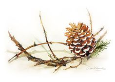 Watercolor Painting - Pine Cone with Branch Painting - Watercolor Pinecone -  5 by 7 print - Archival Print, Minimalist, Home Decor