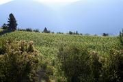 A wonderful winery in Creston...Baillie-Grohman Estate