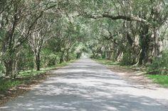 Pearls of Style   Magnolia Plantation   Charleston South Carolina