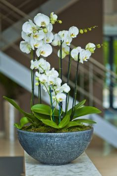 Image result for ORCHID CHRISTMAS DISPLAY
