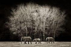 Elephants of Kenya by Marina Cano | http://www.rhinoafrica.com/blog/2013/08/12/world-elephant-day-with-photographer-marina-cano/