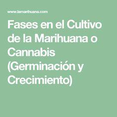 Fases en el Cultivo de la Marihuana o Cannabis (Germinación y Crecimiento)