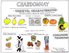 The Characteristics of Chardonnay