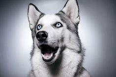 Resultados da Pesquisa de imagens do Google para http://www.animal-photos.org/_photo/4488374.jpg