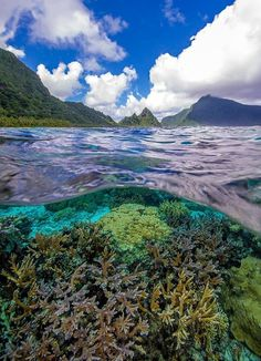 Coral reef, National Park of American Samoa, American Territory of American Samoa