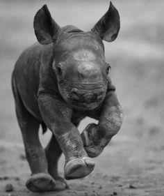 baby rhino to da rescue!