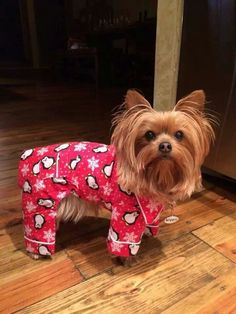 2184 Best Puppy Of The Day Images On Pinterest Cute Dogs Yorkie