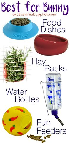 The best cage accessories for bunnies. Rabbit food dishes water crocks hay racks water bottles and fun feeders. Diy Bunny Cage, Diy Bunny Toys, Bunny Cages, Rabbit Cages, Rabbit Toys, Pet Rabbit, Hamsters, Pet Bunny Rabbits, Bunnies