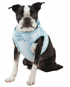 Martha Stewart's Bow Tie Harness