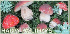 Cultivation Workshops - Shiitake Mushrooms