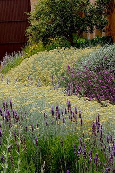 Jardín mediterráneo. Drifts of drought tolerant flowers