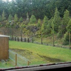 It rains and rains. Vineyard, Rain, Travel, Outdoor, Rain Fall, Outdoors, Viajes, Vine Yard, Vineyard Vines