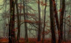 Autumn : the end! by Patrice Thomas - Photo 134255375 - 500px