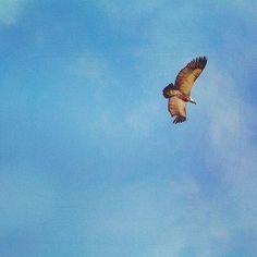 A Cape Vulture circling high above us. Drakensberg, South Africa.  #vulture #birdwatching #capevulture #drakensberg #mountains #drakensbergadventures #drakensbergmountains #hiking #hikingadventure #monkscowl @mcsa_kzn #wanderlust #explore #nature #instanature #adventure #naturalbeauty #beauty #outdoors #outside #clouds #Africa #SouthAfrica #KZN #love #picoftheday #instagood Vulture, Birdwatching, Rock Climbing, South Africa, Funny Animals, Natural Beauty, Cape, My Photos, Wanderlust