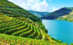 Vineyards in the Douro Wine Region of Portugal. Also seen here, the Valley of the River Douro Portugal. Algarve, Cool Places To Visit, Places To Travel, Antonio Valencia, Douro Portugal, Portugal Travel, Lisbon Portugal, Portugal Trip, Vines