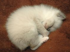 Soft kitty, warm kitty...purr, purr, purr....