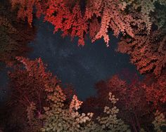 """""""I adore these night sky photographs by Benoit Pailleusing a candle as a secondary light source and meditation about the holism of nature. They're an absolutely stunning capture of the universe through some lovely foliage."""" (The Clothes Horse)"""