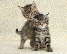animal design unusual   Too Cute: Photographer Captures Unusual Animal Pairings