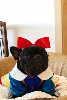 Pardon My French Stuch Strength Funny Bulldog Canine Pet Companion Humor Hoodie