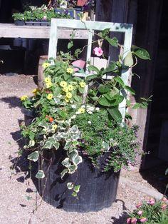 window frame planter.....