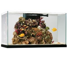 Oceanic tank.  Oceanic tanks are a great mid-tier option and are a good balance between clarity and price.  Get a reef-ready one for salt water tanks unless you want to customize your tank, or have ugly equipment in plain site.
