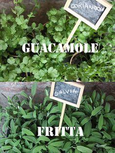 erbe aromatiche - aromatic herbs coriandolo, salvia