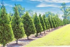 Fantastic North Texas business opportunity. Successful Christmas tree farm with country store and beautiful home, located in premier area within 30 minutes of McKinney. Coming off a record setting season, this property sits on gorgeous acreage - come tour, we'll take the gator around all 40 acres. Call me for details...tons of possibilities for this event center. Hilde Verhaegen Realtor 972.415.5246 Debra Pettit Realty Group Nathan Grace Real Estate- Frisco Square ...your front porch is…