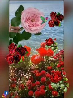 Flower Phone Wallpaper, I Have A Dream, Floral Wreath, Romance, Rose, Flowers, Painting, Bunch Of Red Roses, Amor