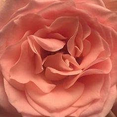ideas flowers aesthetic peach for 2019
