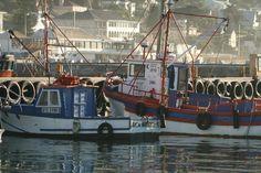 kalk bay harbour - fishing boats