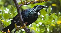 Planting for Birds in your Garden | Tui Products
