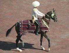 Akhal Teke Horse from Turkmenistan-Native costume Horse Gear, Horse Tack, Akhal Teke Horses, Golden Horse, Horse Costumes, Most Beautiful Horses, Majestic Animals, Equine Photography, Palomino
