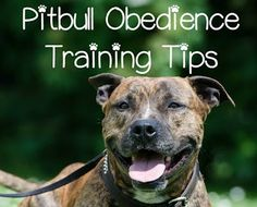 Pitbull Puppy Training Tips – Obedience Training