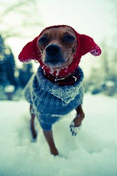 A dog with a blue, knit sweater and a red, knit hat that also covers its ears.