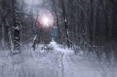 https://flic.kr/p/QFniXX | Etude #170207DSC3137. | The path among the trees.