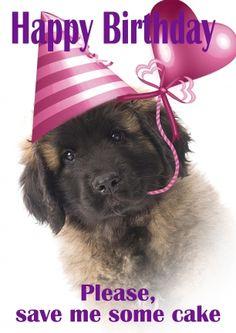 Verjaardag Leonberger puppy met feestmuts (@Karen van Gerner Fotografie)