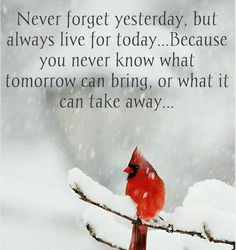 Never forget the special people you love yesterday. Learn from any mistakes from yesterday, say your sorries mean them, leave the past and start with a fresh start day. Always love and enjoy that special  someone today make it precious time together with them. You never know what God's plans are for you or you loved ones tomorrow.