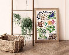 Gin Botanicals: Juniper Plant Watercolour Art Print Limited   Etsy Watercolor Plants, Watercolour Art, Housewarming Card, Dolphin Art, Gin Gifts, Recycled Gifts, Large Wall Art, Boho Decor, Juniper Plant