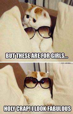 #funny #kitty