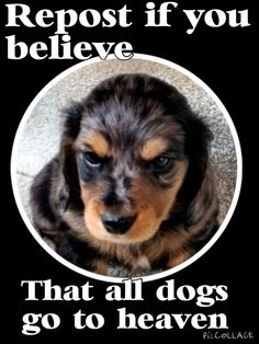 No. I believe all animals go to heaven.