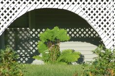 """I like the way a lattice-framed semi-circle has been incorporated into this porch front. It creates a niche in which a plant can become the center of attention (here, a shade-loving fern). Discover the qualities of the so-called """"interrupted"""" fern in this piece: http://landscaping.about.com/od/wildflowers/ss/Interrupted-Ferns-Tall-Native-Plants-for-Shade-Gardens.htm"""