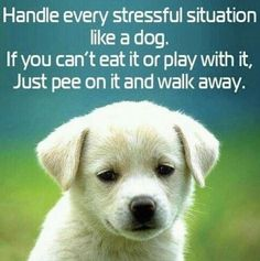 more than sayings: Handle every stressful situation like a dog