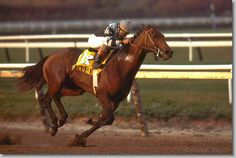 Slew O' Gold, champion 3 year old of 1983, and champion older horse of 1984. (by Mark Wyville)