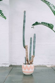 ✿* Cactus *✿* Suculentas *✿ little cactus Cacti And Succulents, Potted Plants, Cactus Plants, Indoor Plants, Tall Cactus, Indoor Cactus, Cactus Cactus, Indoor Herbs, Cactus Decor
